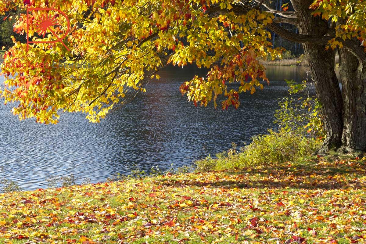 L'automne est là : mise en chauffe de votre cheminée